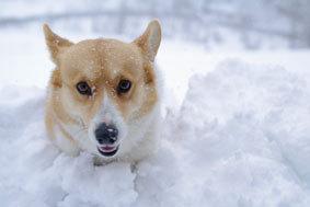 小谷村古民家再生雪と犬10�p.jpg