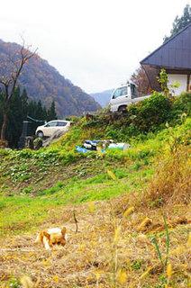 小谷村古民家再生秋の畑.jpg